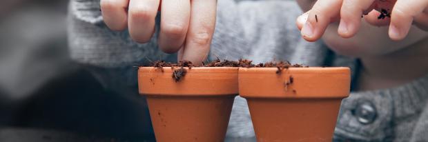 Kind pflanzt Blumen in kleine Töpfe
