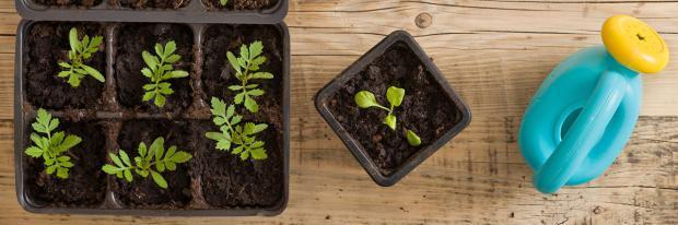 Zusammen mit Kindern Pflanzen vorziehen