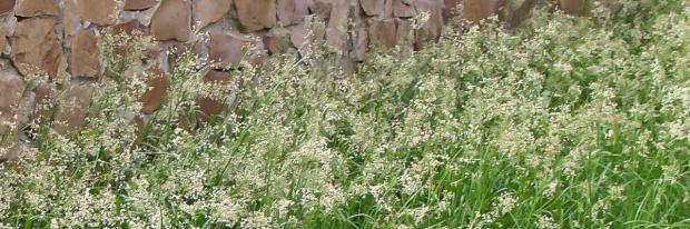 Gräser Im Garten die 10 imposantesten gräser im garten garten diybook at
