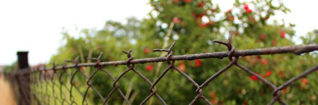 Apfelbaum hinter Drahtzaun