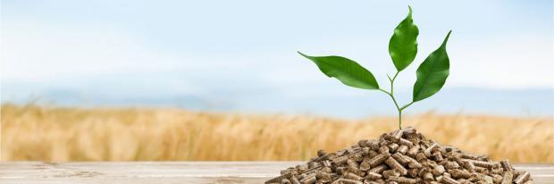Sind Pellets wirklich umweltfreundlich?