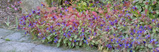 Blühende Schattenstauden im Schattengarten