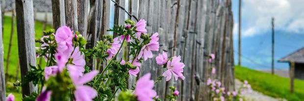 Sichtschutz für den Garten: Das sind die besten Optionen ...