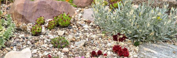 Steingarten Mit Hauswurz Und Anderen Pflanzen