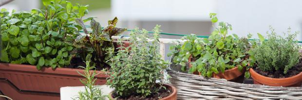 Dicht bepflanzter Balkon in der Stadt