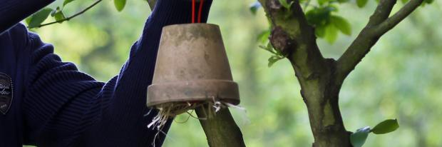 Insektenhaus am Baum zur Blautlausbekämpfung