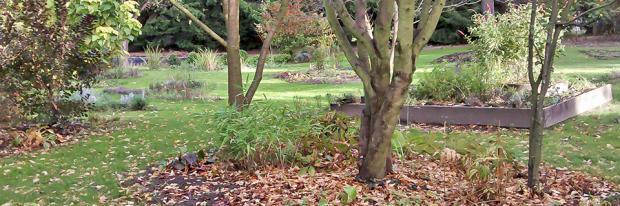 Endspurt Im Grunen Garten Auf Winter Vorbereiten Garten Diybook At