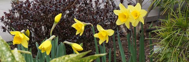 Der Garten Im Marz Das Fruhjahr Beginnt Garten Diybook At