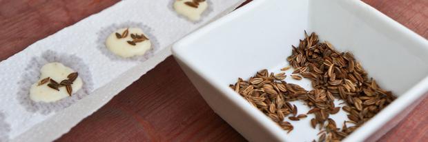 Offenes Saatband, daneben eine Schale mit Saatgut