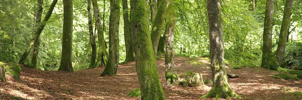 Laubwald als Rohstoffquelle