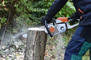 Vor der Baumfällung: Das ist zu beachten!