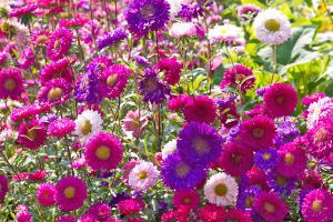 Die 10 buntesten Beetpflanzen