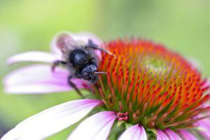 Zurück zur Natur: Die 10 wichtigsten Bienenpflanzen