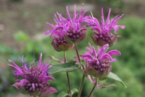 10 aromatische Kräuter und Duftpflanzen zum Wohlfühlen