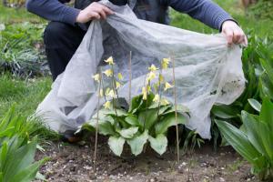 Späte Gefahr: Frostschutz für Pflanzen im Frühjahr