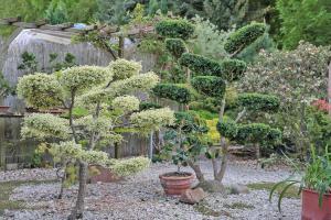 Garten mit Stil: Formgehölze und Gartenbonsai
