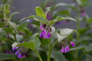 Die 10 wichtigsten Heilpflanzen aus dem Garten
