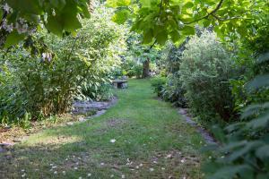 Der Schattengarten – Buntes Leben im Zwielicht