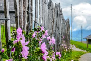 Sichtschutz für den Garten: Das sind die besten Optionen