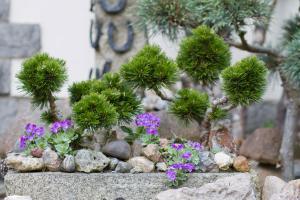 Steingarten gestalten – Tipps für das eigene Steinbeet