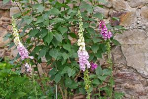 Die 10 schönsten Wildpflanzen für den Naturgarten