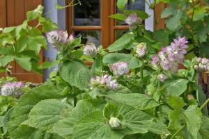 Die 10 geheimnisvollsten Hexenkräuter und Zauberpflanzen