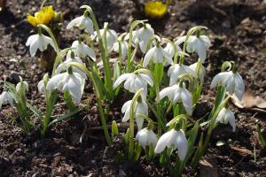 Die 10 schönsten Zwiebelblumen für den Garten