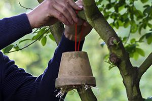 Insektenhaus bauen - Natürliche Blattlausbekämpfung mit Ohrwürmern