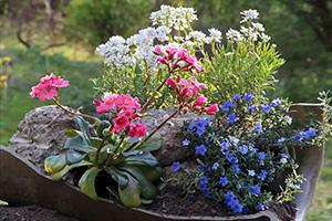 Steingarten anlegen - Anleitung für Mini-Steingarten
