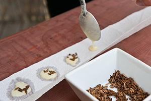 Aussaat vorbereiten - Saatscheiben und Saatband selber machen