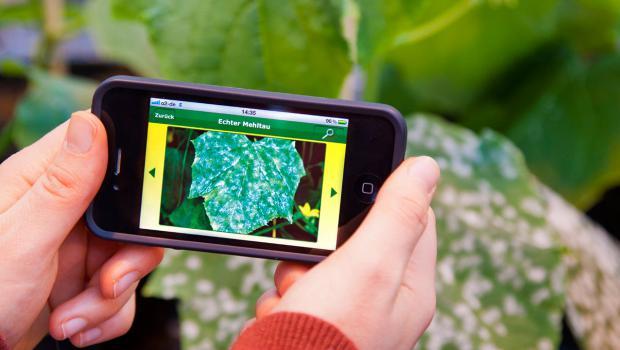 Schnelle Rettung Pflanzen Krankheiten Erkennen Per App In Technik