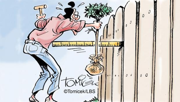 Grenzstreitigkeiten Mauer Zaun Und Hecke Vor Gericht In Wohnrecht