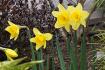 Der Garten im März - Das Frühjahr beginnt