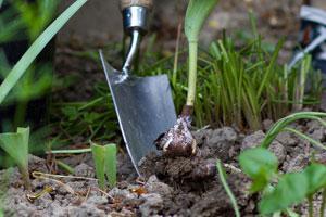 Der ziergarten im mai tipps und tricks vom g rtner - Gartenarbeiten im mai ...