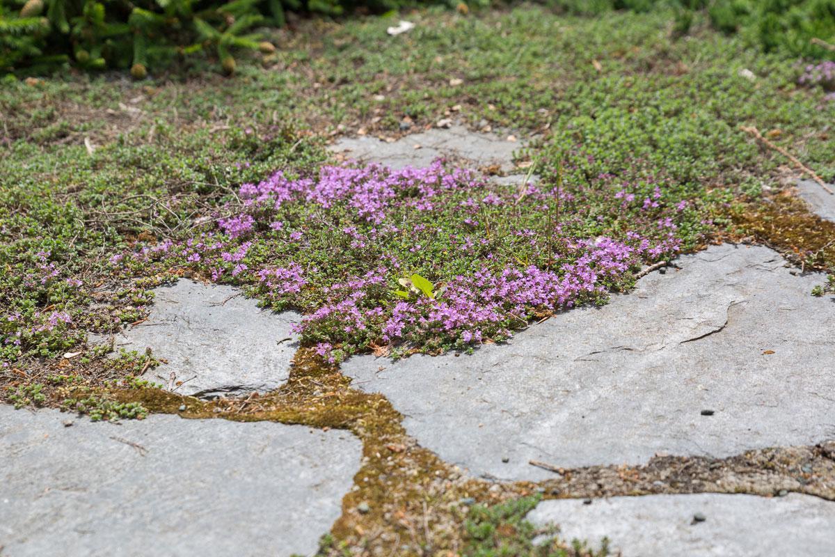 es geht auch schöner: fugenbepflanzung alter trittsteine - garten