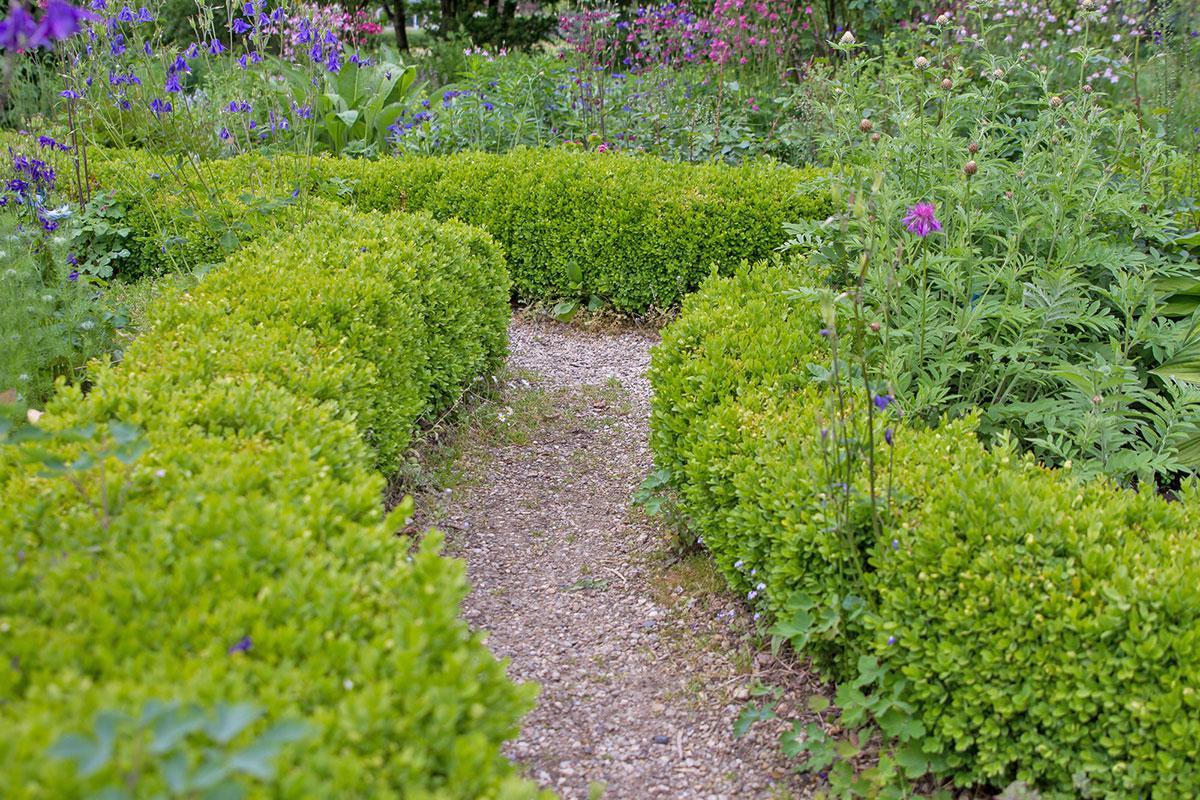die 10 schönsten pflanzen für trockenmauer und co. - garten @ diybook.at