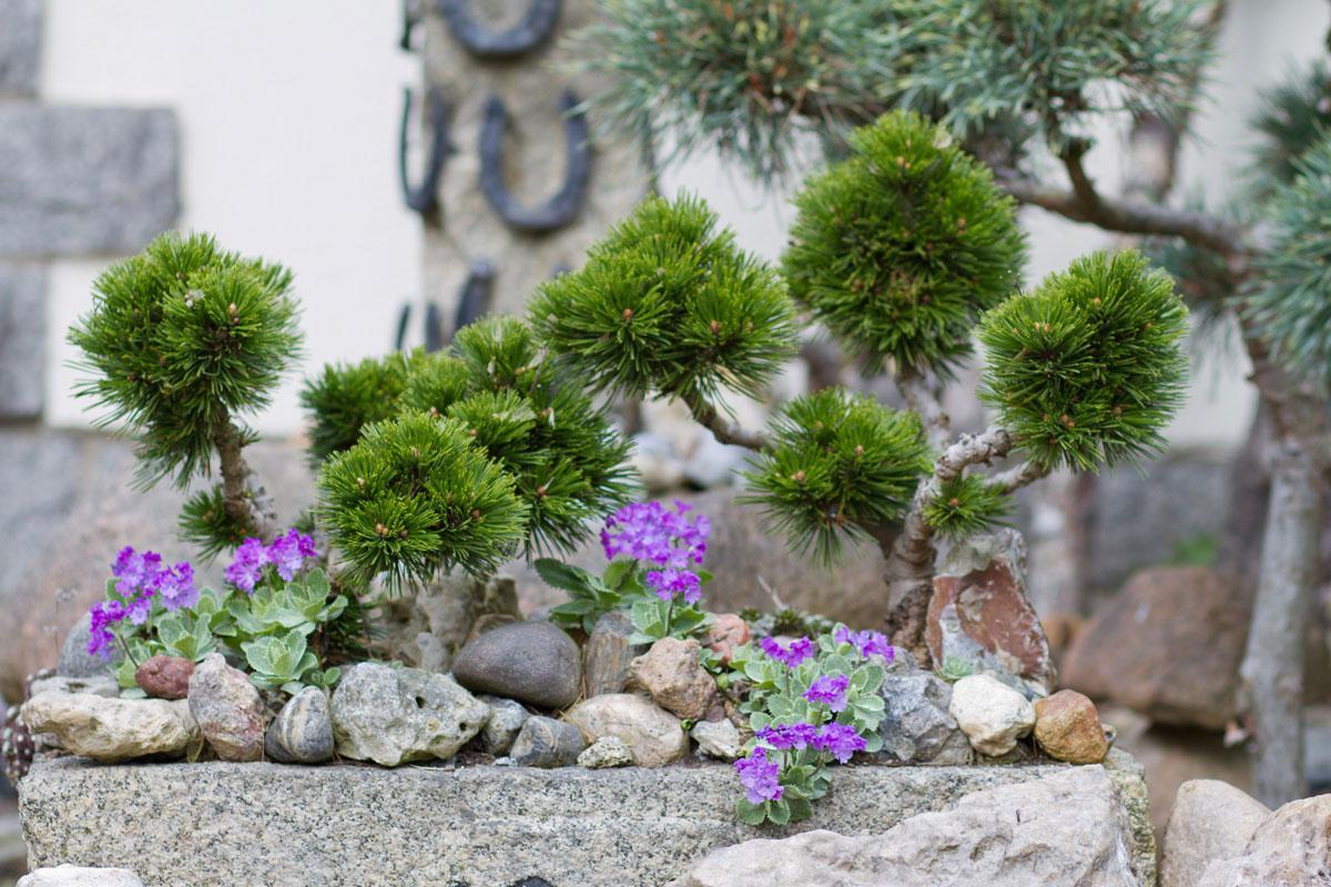 steingarten anlegen schritt f252r schritt swalif